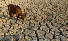 jwj Drought 01